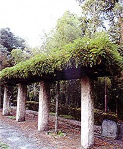 神苑の大藤の藤棚